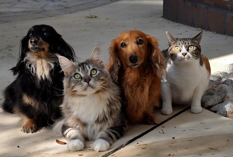 Senao aumenta pena para quem maltrata cães e gatos - Maranhão Hoje
